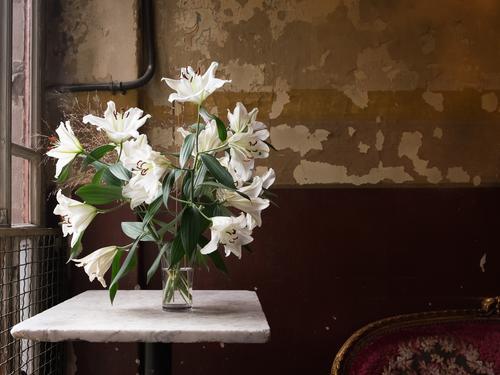 Lilien alt Farbe grün weiß Blume Fenster Blüte Innenarchitektur Tod braun Wohnung Raum Häusliches Leben Dekoration & Verzierung Tisch Romantik