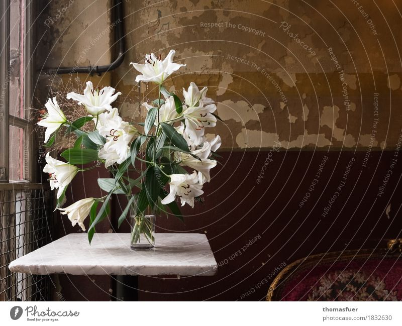Lilien Wohnung Innenarchitektur Dekoration & Verzierung Sofa Tisch Tapete Raum Blume Blüte weiße Lilien Vase alt Originalität braun grün Romantik Hoffnung