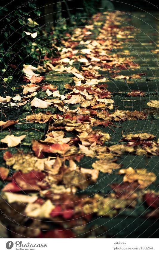 Spätjahr Farbfoto Außenaufnahme Morgendämmerung Herbst rot Blatt Herbstlaub Wege & Pfade herbstlich