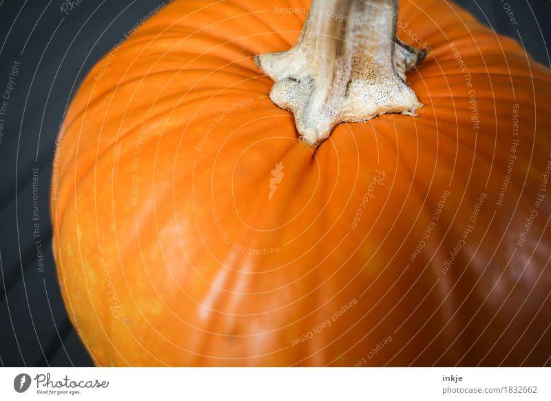 Kürbis Gesunde Ernährung Herbst orange frisch groß rund Gemüse Ernte üppig (Wuchs) Kürbiszeit