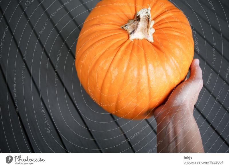 Kürbis Gesunde Ernährung Hand Herbst orange frisch groß rund festhalten Gemüse Ernte üppig (Wuchs) Kürbiszeit