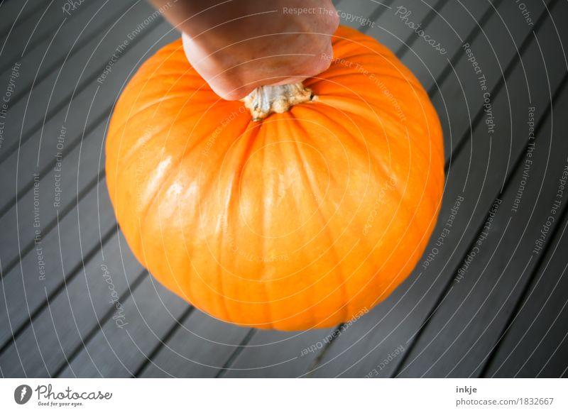 Kürbis schwer orange groß Kürbiszeit Ernte Gesunde Ernährung Gemüse heben rund Herbst frisch üppig (Wuchs)