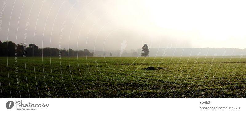 Harzvorland Farbfoto Außenaufnahme Menschenleer Textfreiraum links Textfreiraum oben Textfreiraum unten Morgen Morgendämmerung Licht Schatten Kontrast