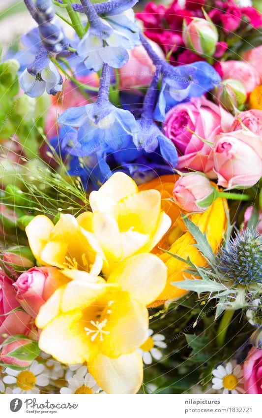 Wildblumen Lifestyle elegant Umwelt Natur Pflanze Frühling Sommer Herbst Blume Gras Sträucher Rose Tulpe Orchidee Blatt Blüte Grünpflanze Wildpflanze exotisch