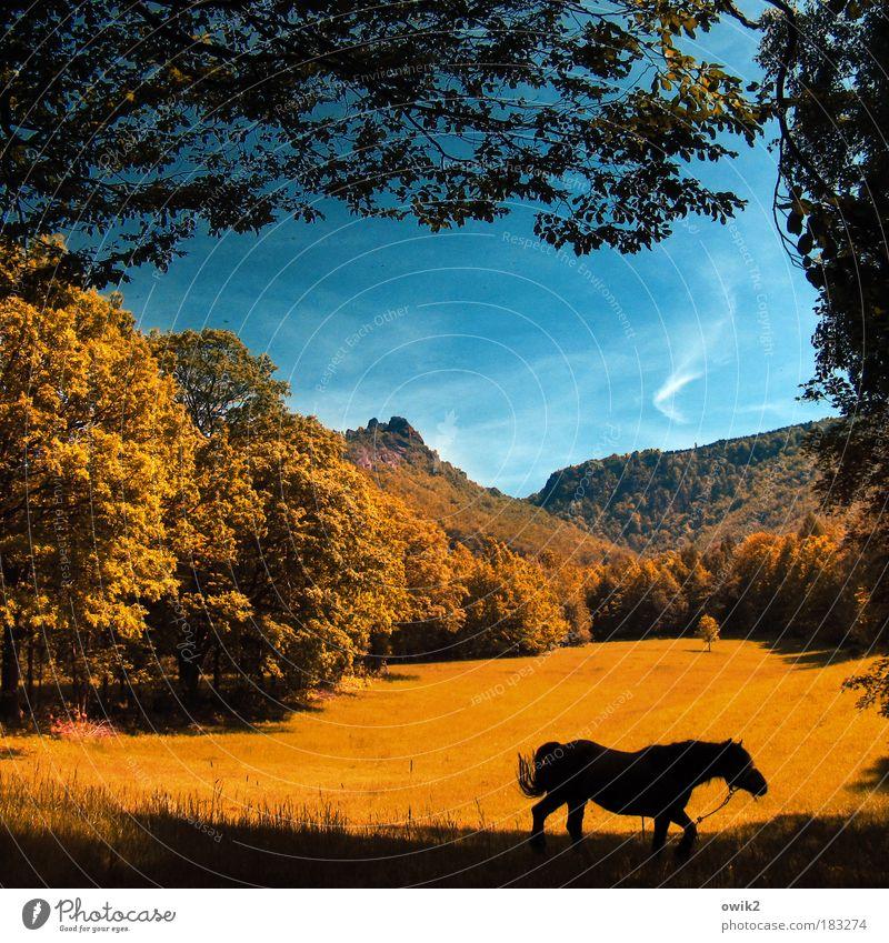 Wanderndes Pferd Reiten Ausflug Ferne Umwelt Natur Landschaft Himmel Wolken Horizont Herbst Klima Schönes Wetter Baum Gras Sträucher Wiese Wald Hügel