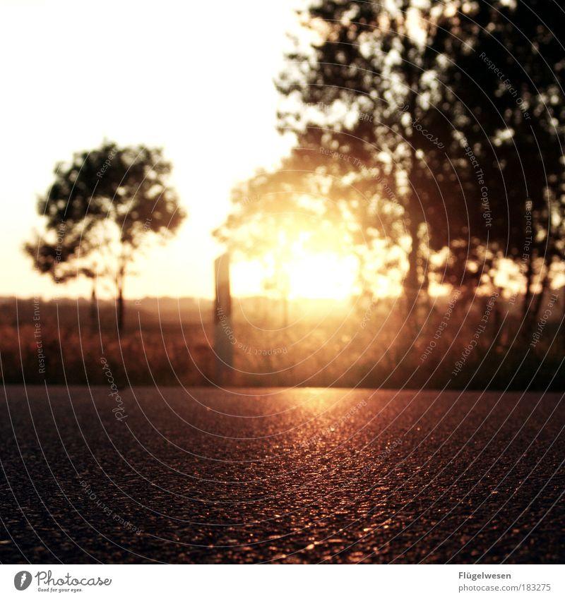 The Sun Is Shining Down On Me Farbfoto Außenaufnahme Dämmerung Reflexion & Spiegelung Freizeit & Hobby Sommer Sonne Sonnenaufgang Sonnenuntergang Straße
