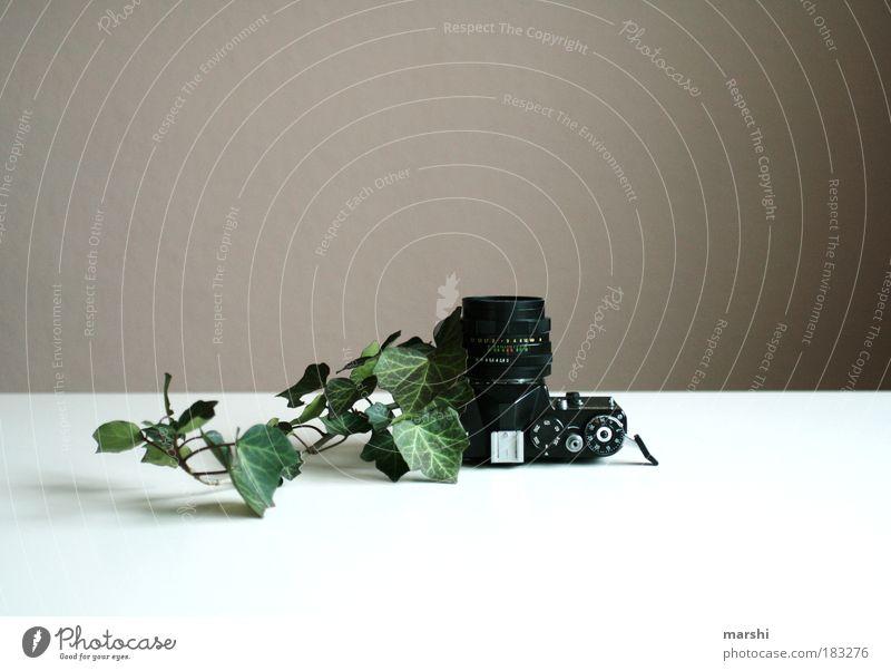 fotogener Efeu Farbfoto Innenaufnahme Natur Frühling Herbst Pflanze Blatt außergewöhnlich grün schwarz Fotokamera Fotografie Fotografieren analog alt