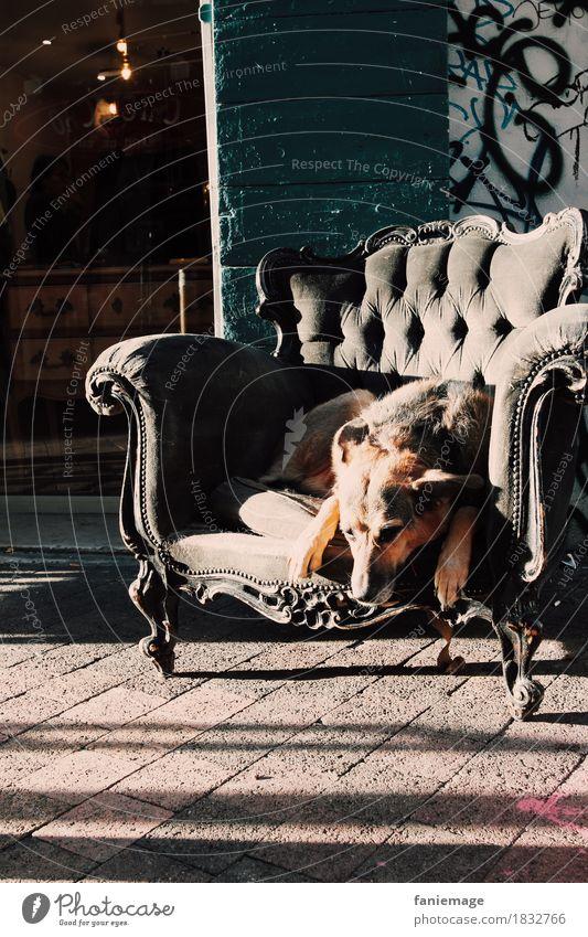 siesta Tier Haustier Hund 1 schlafen Sessel Erholung Siesta lustig Stadt Stadtleben Graffiti altehrwürdig Schattenspiel Erschöpfung Pause Schäferhund süß