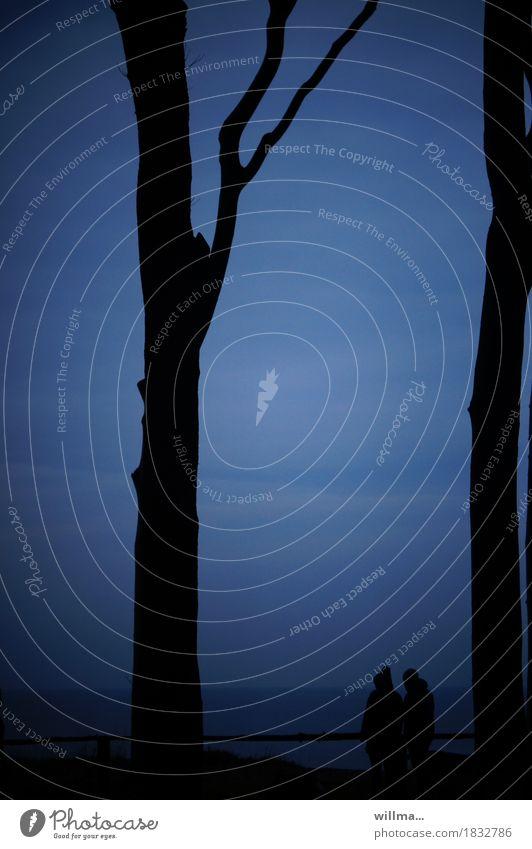zweisam Paar Baum Küste Seeufer Ostsee Nienhagen Gespensterwald dunkel blau schwarz Romantik kahl Zusammensein Geländer Natur Naturschutzgebiet Astgabel