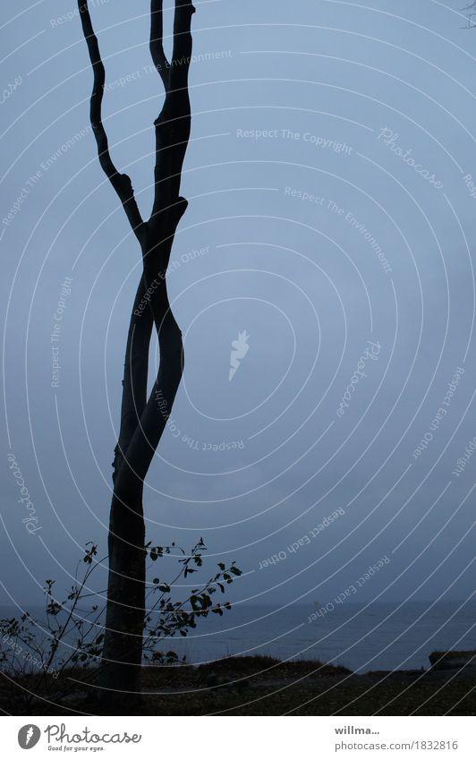 einsamer Buchenstamm an der Küste Baum Seeufer Ostsee Nienhagen Gespensterwald blau schwarz Natur Silhouette Meer kahl Textfreiraum ruhig dünn Teilung Farbfoto