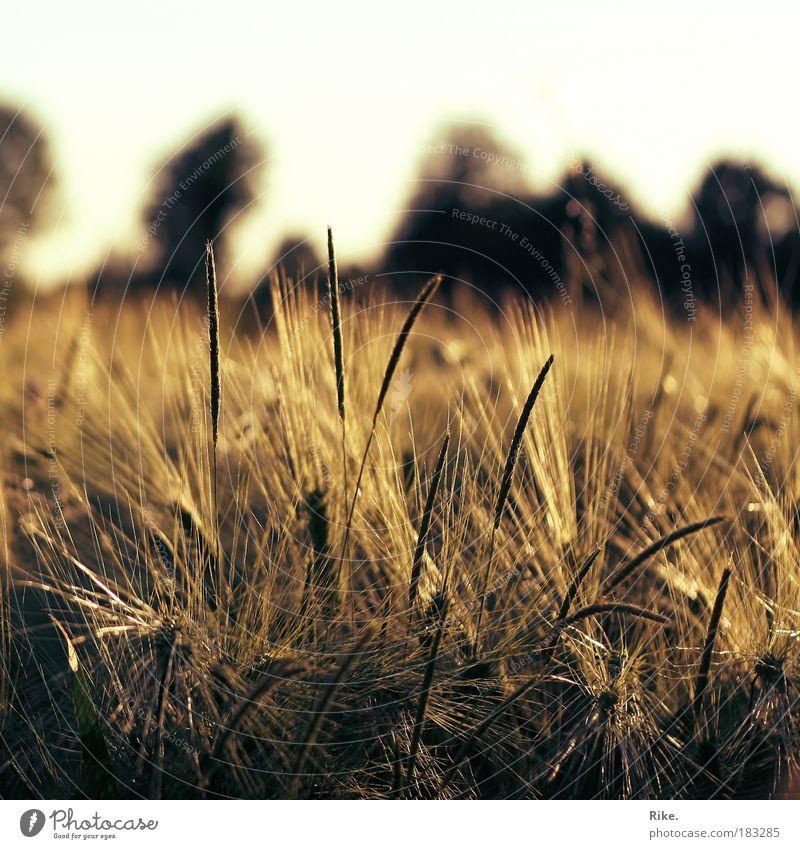 Fühlen. Farbfoto Außenaufnahme Menschenleer Textfreiraum oben Abend Dämmerung Licht Sonnenlicht Sonnenaufgang Sonnenuntergang Schwache Tiefenschärfe