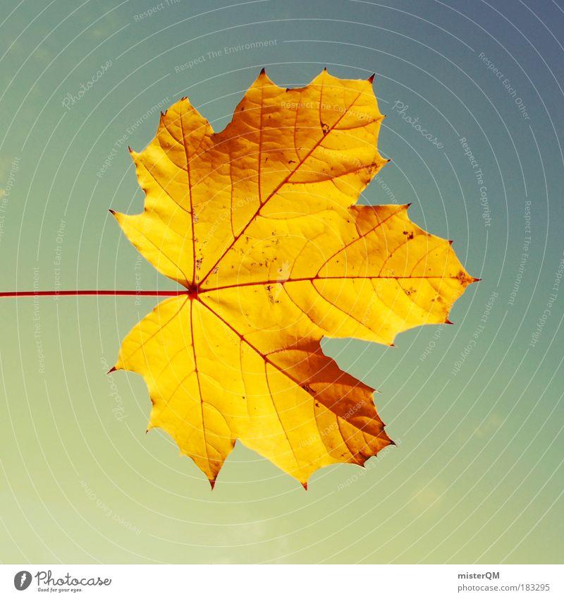 Golden Leaf. Himmel Natur schön Blatt Herbst Beleuchtung Kindheit gold natürlich Design ästhetisch Symbole & Metaphern Kreativität Ende Jahreszeiten Wind