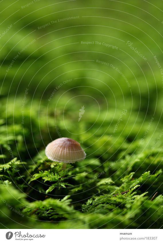 Dickköpfchen Natur grün Pflanze ruhig Ernährung Herbst klein Park natürlich Wachstum niedlich Idylle Bioprodukte Pilz Moos Umweltschutz