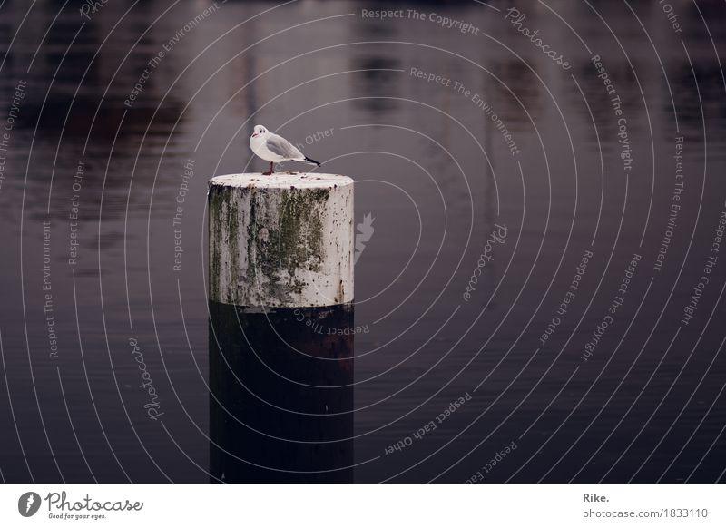 Zwischenstopp. Ferien & Urlaub & Reisen Tourismus Freiheit Meer Umwelt Natur Wasser Nordsee Ostsee See Fluss Tier Wildtier Vogel 1 warten Möwe Hafen sitzen