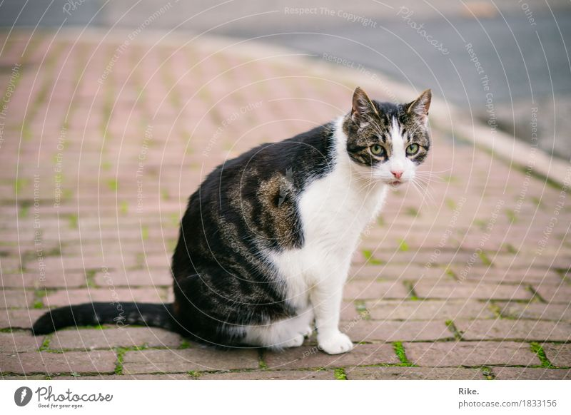 Katze von nebenan. Straße Tier Haustier 1 schön wild Tierliebe Natur Schüchternheit begegnen Pflastersteine Außenaufnahme Schnurrhaar Fell niedlich Pfote