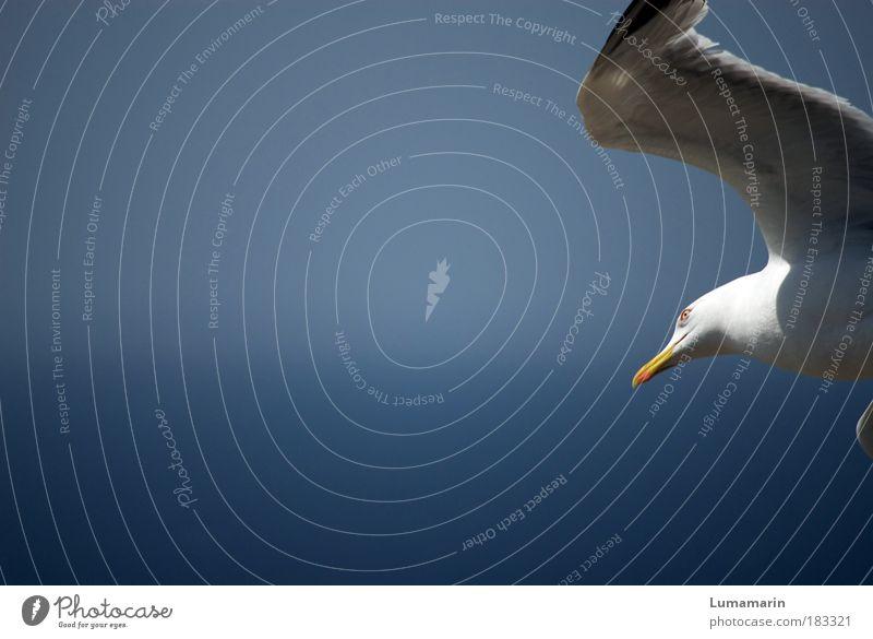 Luftlinie blau weiß schön Meer Sommer Ferien & Urlaub & Reisen Tier Leben Umwelt Luft Stimmung Horizont Vogel Wind elegant fliegen