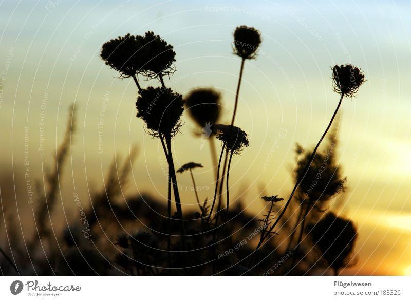 Sommererinnerungen Außenaufnahme Dämmerung Ferien & Urlaub & Reisen Umwelt Natur Himmel Sonnenaufgang Sonnenuntergang Pflanze Gras Sträucher Grünpflanze atmen