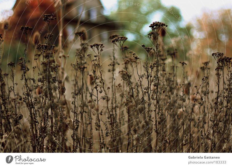 am Tag spukts in den Häusern nicht Natur alt grün Einsamkeit Haus Fenster Gefühle braun Fassade groß Sträucher bedrohlich Hütte Ruine Wildpflanze