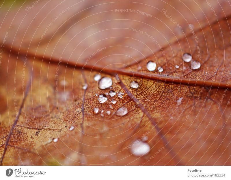 verwelkt Farbfoto Außenaufnahme Nahaufnahme Detailaufnahme Makroaufnahme Textfreiraum links Textfreiraum oben Morgen Tag Licht Unschärfe Umwelt Natur Pflanze