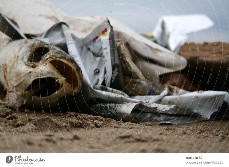 fischbone Natur alt Wasser Meer Strand Tier Umwelt Tod Küste Sand Lebensmittel dreckig Ernährung Fisch Tiefenschärfe