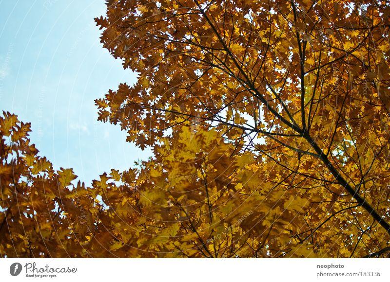 komplementäre Farben Natur schön alt Himmel Baum blau Pflanze Blatt gelb Wald Herbst Park Wärme braun Tanzen Wetter