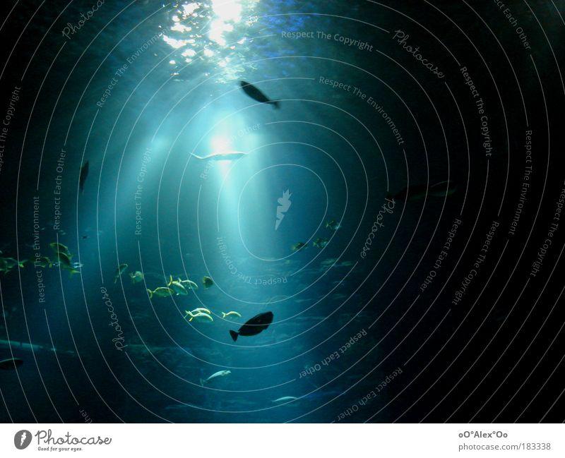 Eintauchen blau Wasser Meer Tier ruhig Erholung träumen Schwimmen & Baden Tourismus Ausflug ästhetisch Idylle Fisch beobachten genießen