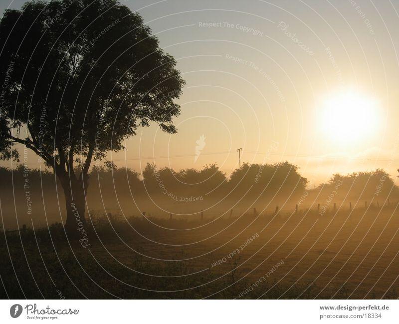 Morgens Feld Nebel Sonnenaufgang marschieren