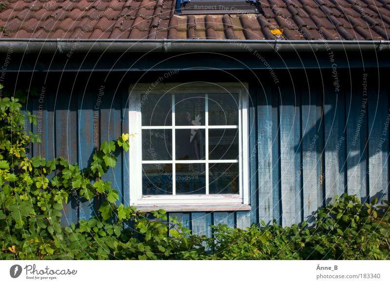 Grüne Ranken an blauem Haus grün blau weiß Blatt Haus Fenster Holz Garten braun Zufriedenheit Wohnung Fassade Häusliches Leben einzigartig Dach