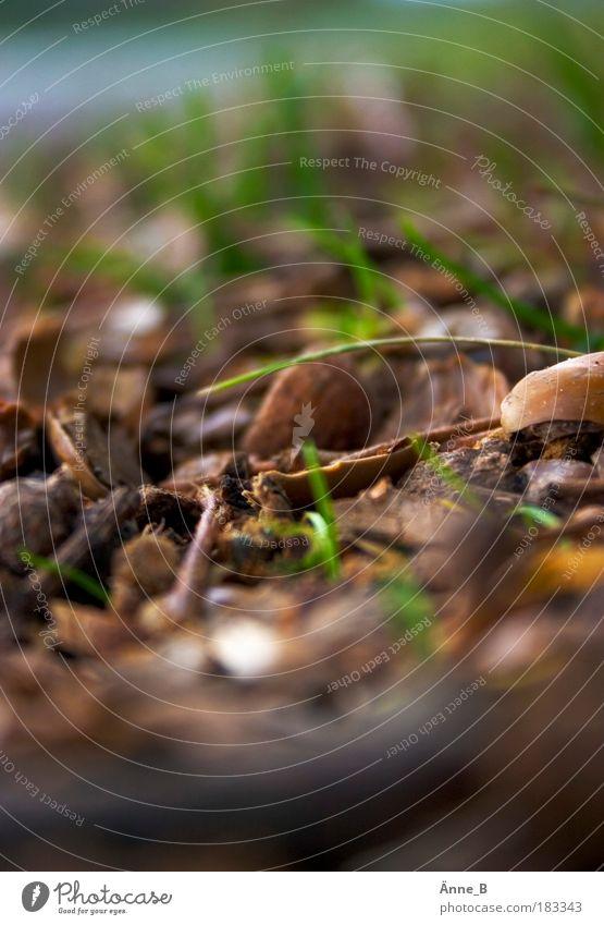 Tunnelblick im Herbst Natur Pflanze Gras Blatt Nutzpflanze Wildpflanze Straßengraben fallen dehydrieren trocken unten braun gold grün ruhig Verfall