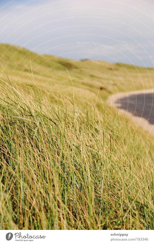 Küstenstreifen Natur grün Wiese Gras Landschaft Küste Wind Sträucher natürlich Hügel Nordsee