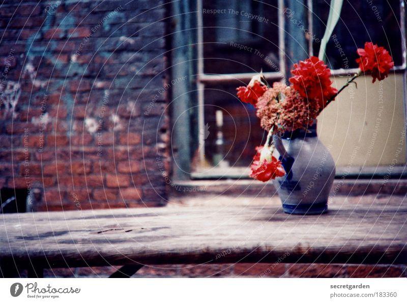 verfallsdatum überschritten. blau Sommer Blume rot Fenster Wand Traurigkeit Blüte Mauer Holz Häusliches Leben Dekoration & Verzierung Geburtstag leer Tisch Armut
