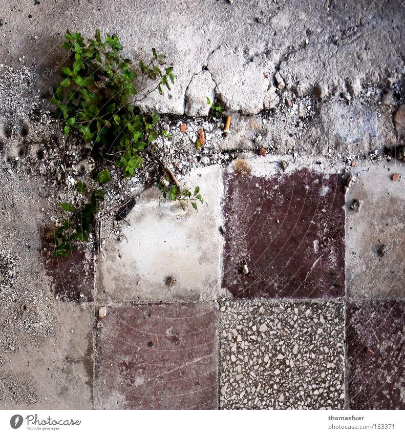 Momentaufnahme Natur alt grün Pflanze Stein Traurigkeit braun dreckig Wohnung Beton Perspektive Wachstum Bad Küche kaputt Bodenbelag