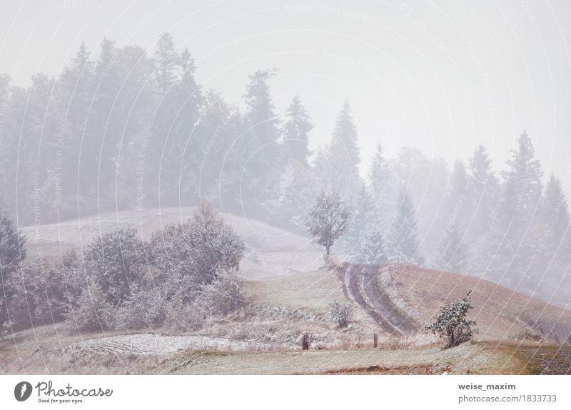 Erster Schnee im Herbst. Schneefälle in Bergen Natur Ferien & Urlaub & Reisen weiß Baum Landschaft rot Winter Wald Berge u. Gebirge Umwelt natürlich Gras