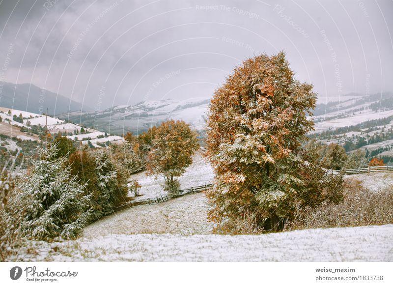 Erster Schnee im Herbst. Schneefälle in Bergen Himmel Natur Ferien & Urlaub & Reisen grün weiß Baum Landschaft rot Wolken Ferne Winter Wald Berge u. Gebirge