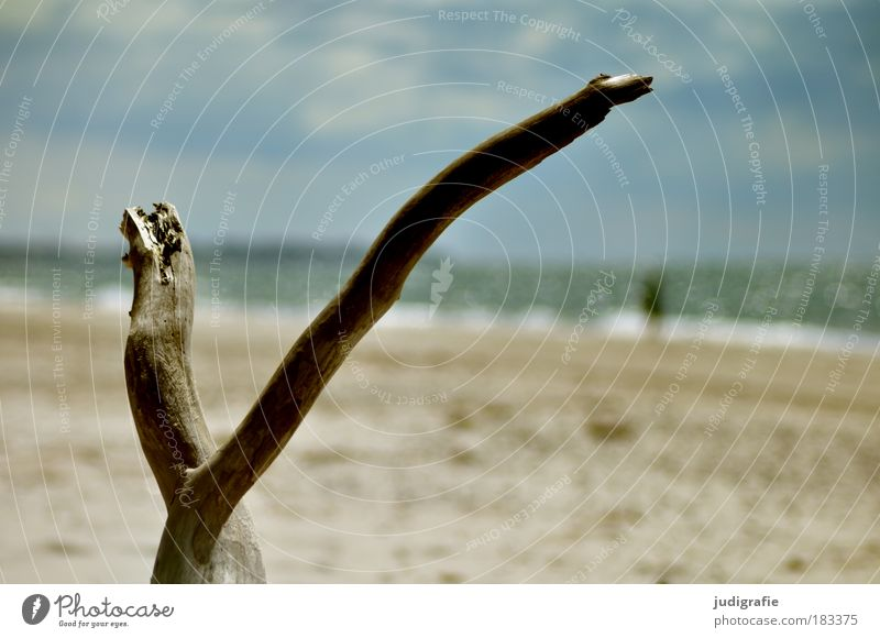 Weststrand Mensch Natur Himmel Meer Strand Ferien & Urlaub & Reisen ruhig Ferne Erholung Landschaft Küste Umwelt Ast Idylle Schönes Wetter Fernweh