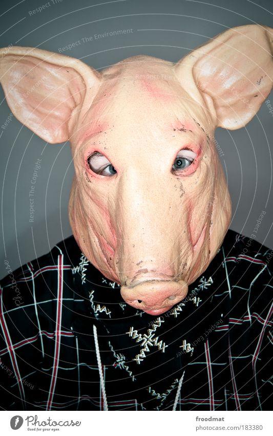 schweinskopfsülze Farbfoto mehrfarbig Innenaufnahme Blitzlichtaufnahme Weitwinkel Porträt Tierporträt Vorderansicht Blick in die Kamera Mensch maskulin Halstuch