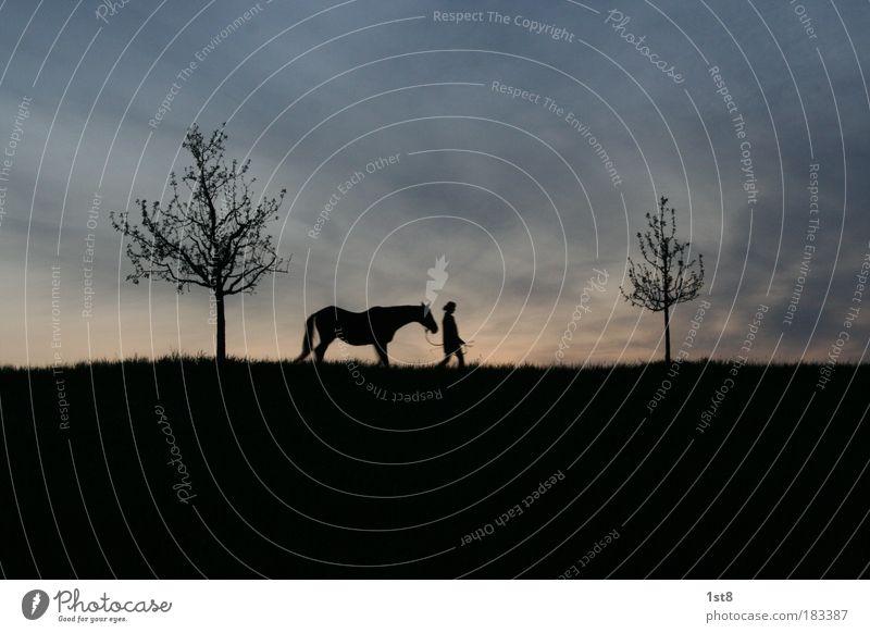Baum, Pferd, Frau, Baum Farbfoto Außenaufnahme Menschenleer Textfreiraum oben Textfreiraum unten Hintergrund neutral Abend Dämmerung Silhouette Gegenlicht