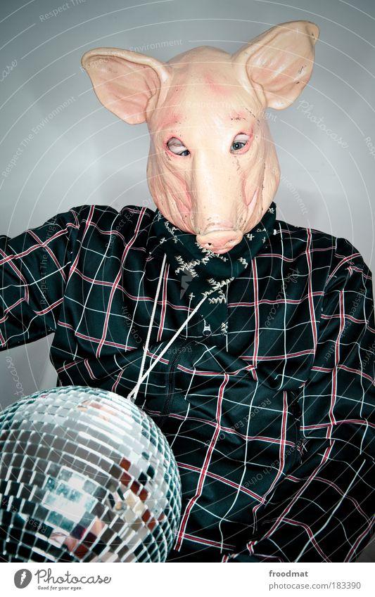 popstar schweinegrippe Farbfoto mehrfarbig Innenaufnahme Studioaufnahme Blitzlichtaufnahme Tierporträt Oberkörper Vorderansicht Blick in die Kamera Nutztier