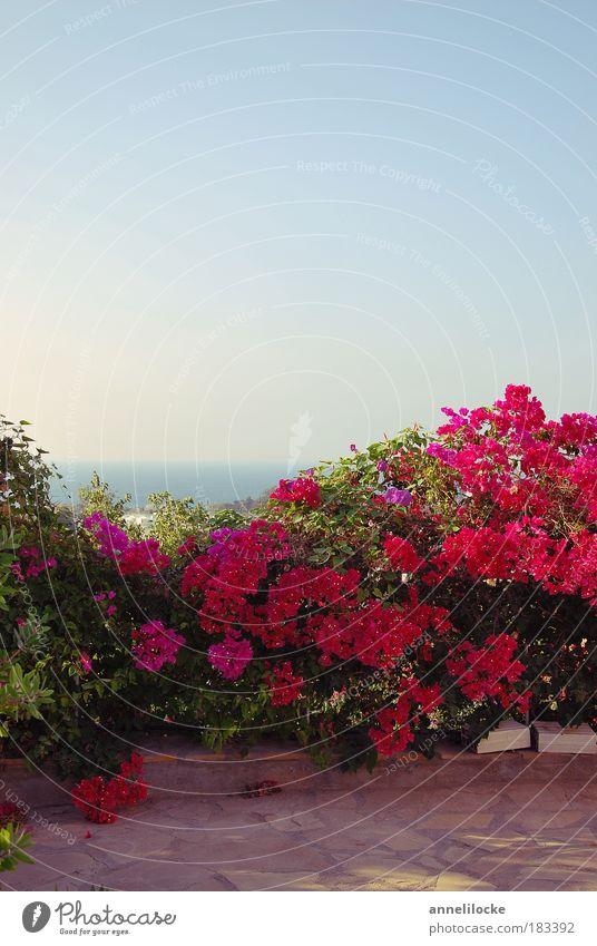 Ausblick Sonne Meer blau Pflanze Ferien & Urlaub & Reisen Blatt Ferne Erholung Wand Blüte Garten Freiheit Mauer Wärme Landschaft rosa