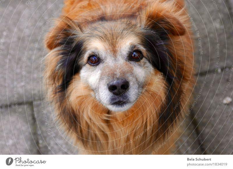 Roter Bobby Hund Tier Freude Sport Gesundheit Glück Freiheit Freizeit & Hobby wandern Ausflug Fahrrad Fröhlichkeit Fahrradfahren Lebensfreude niedlich Neugier