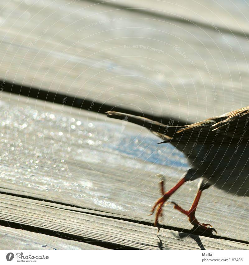 Ich bin dann mal weg Natur Tier Umwelt Leben Holz Bewegung klein springen braun Vogel Angst laufen Geschwindigkeit Bodenbelag Terrasse Holzfußboden