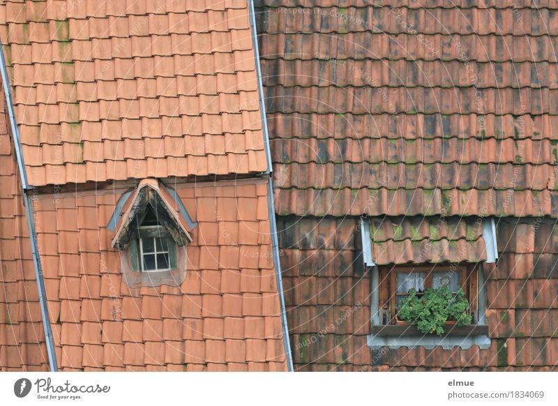 Dachlandschaft (3) Häusliches Leben Wohnung Kleinstadt Altstadt Haus Fenster Fensterln alt eckig historisch einzigartig rot Glück Geborgenheit Design