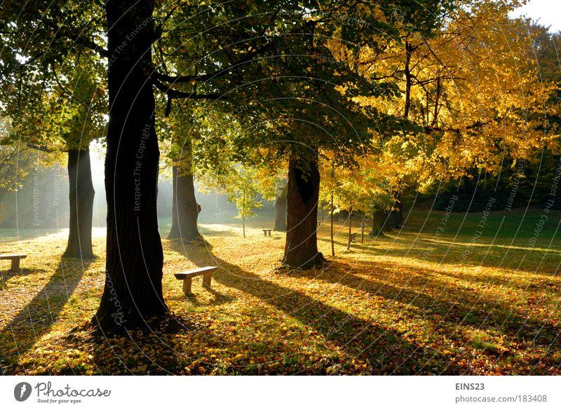 Herbstschatten Natur Baum Pflanze gelb Morgen Herbst Tiefenschärfe Wetter Gegenlicht Park Landschaft braun Menschenleer Schatten Umwelt authentisch