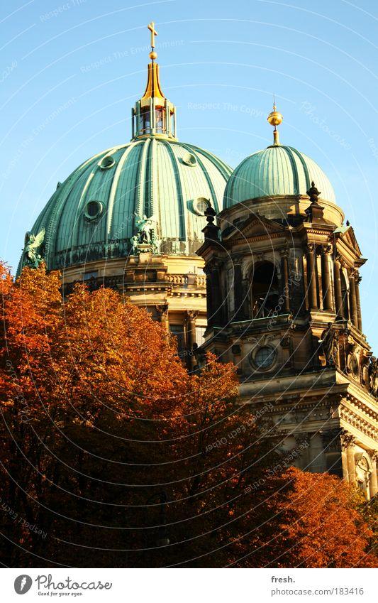 heiliger Herbst Farbfoto Außenaufnahme Menschenleer Tag Sonnenlicht Froschperspektive Chor Baum Hauptstadt Dom Sehenswürdigkeit Denkmal alt groß historisch
