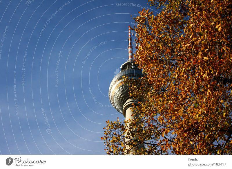 """Großstadt""""dschungel"""" schön Herbst Berlin außergewöhnlich Schönes Wetter Berlin-Mitte Sehenswürdigkeit Hauptstadt Berliner Fernsehturm Blauer Himmel herbstlich"""