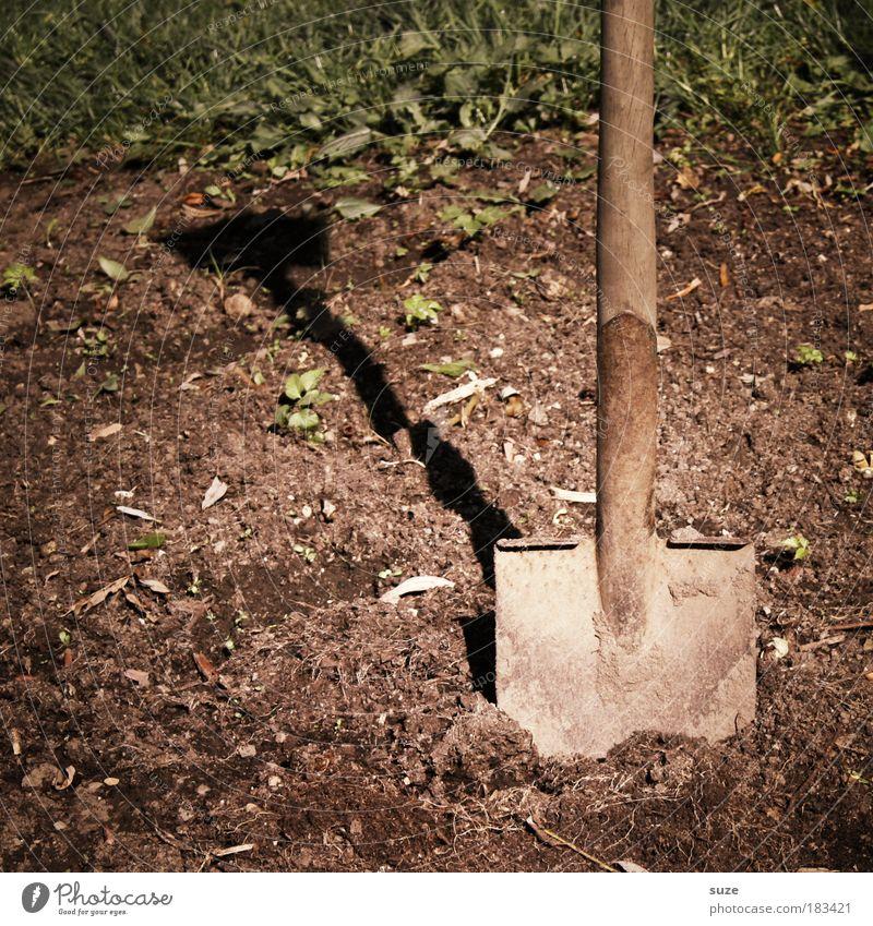 Ein guter Boden ... Natur Landschaft Umwelt Wiese Gras Garten braun Arbeit & Erwerbstätigkeit Erde Freizeit & Hobby dreckig Erfolg Beginn Zukunft Häusliches Leben Pause