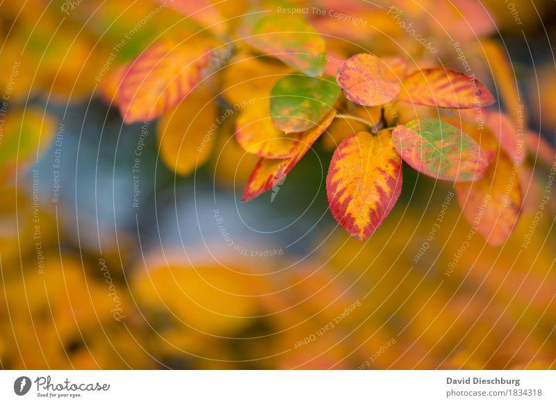 Herbsttag Natur Landschaft Pflanze Tier Schönes Wetter Baum Sträucher Blatt Garten Park Wald gelb orange rot herbstlich Herbstlaub Herbstfärbung Herbstbeginn