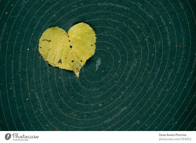 I <3 Photocase Natur Wasser blau Blatt Liebe Einsamkeit gelb Farbfoto Außenaufnahme Regen Umwelt Herz dreckig Trauer Tropfen kaputt