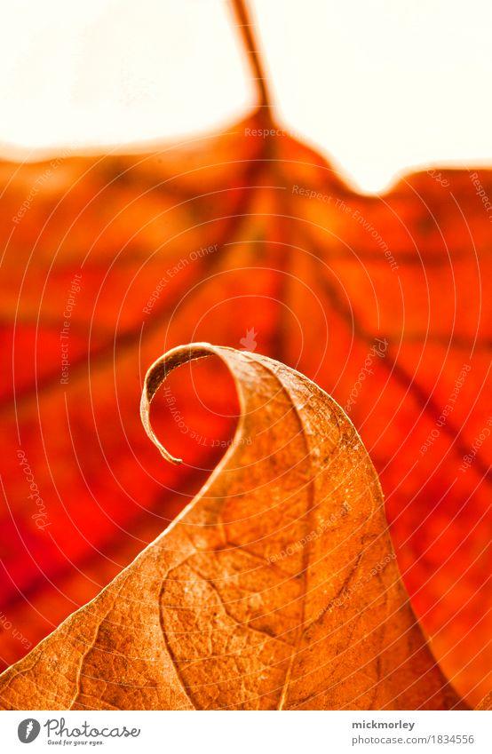 Herbstwelle Natur alt Erholung Blatt ruhig Umwelt Wiese natürlich Gesundheit Garten Denken Gesundheitswesen braun orange Zufriedenheit