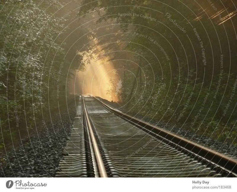 Licht am Ende des Gleises Landschaft Luft Sonnenlicht Sommer Wetter Nebel Baum Wald Verkehr Verkehrswege Bahnfahren Schienenverkehr Eisenbahn Bahnübergang